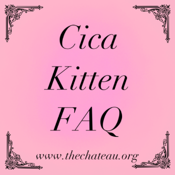 Cica Kitten FAQ – What is a Cica Kitten? post thumbnail