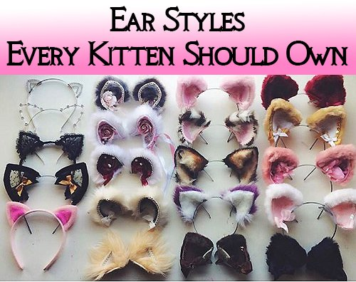 Ear Styles Every Kitten Should Own post thumbnail