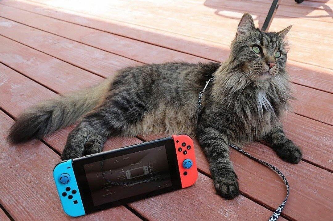 Gamer Cat SN Exchange post thumbnail