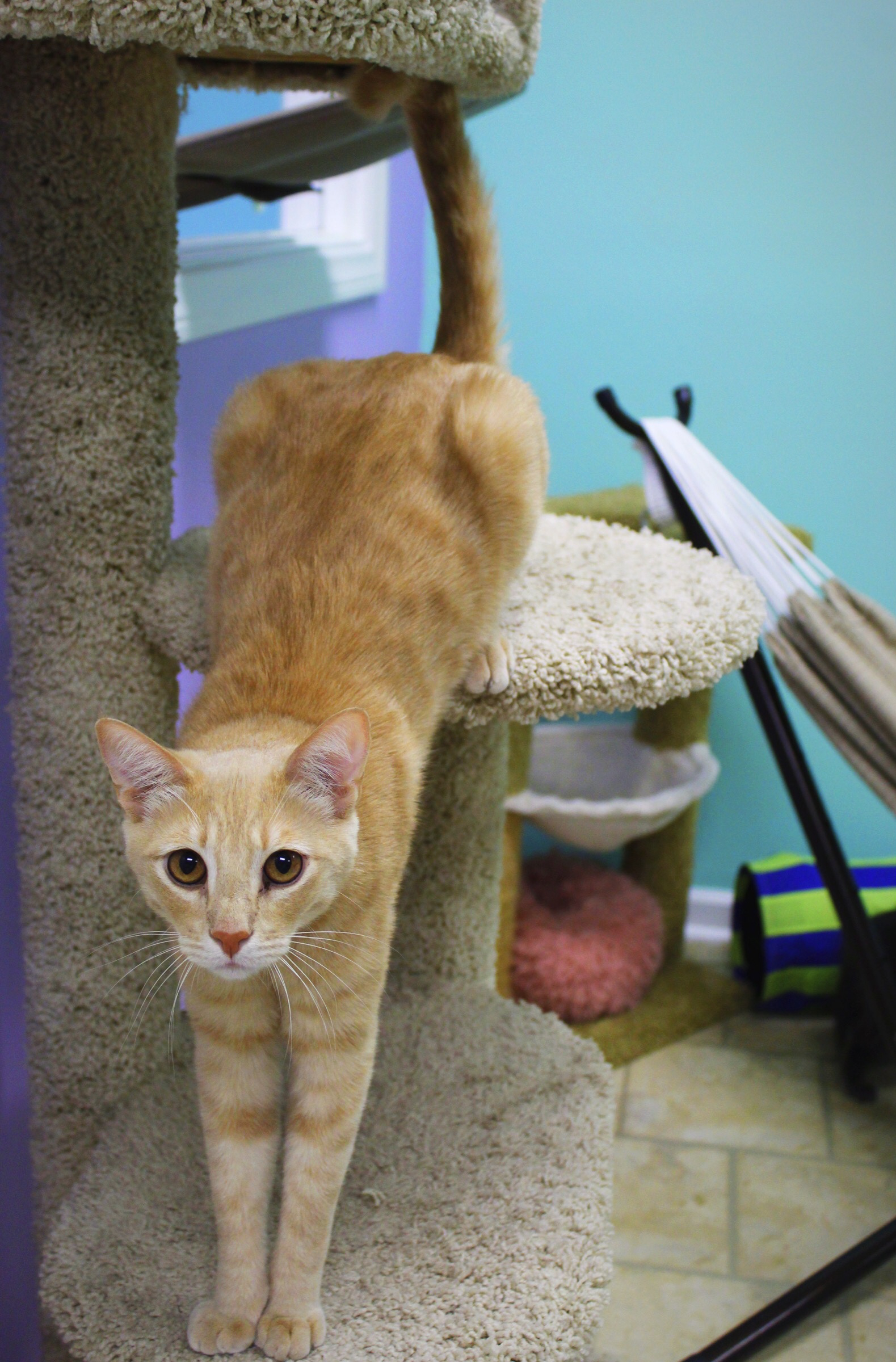 Kitten at the Cat Cafe: My Experience Corralling Cats and Pampering Paws post thumbnail
